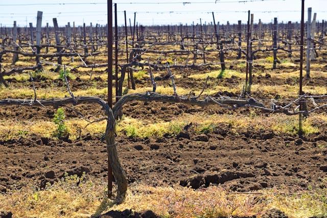 Виноградники весной, Фанагория, Сенной