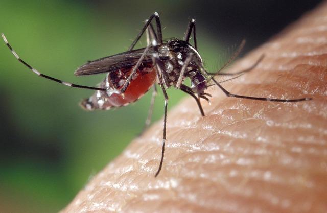 Mosquito-1332382 640.jpg