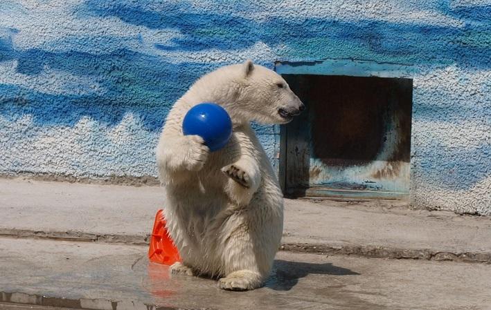 Белый медведь, Ростовский зоопарк, Ростов-на-Дону