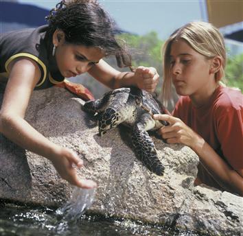 Играющие с черепахой детишки Эйлата