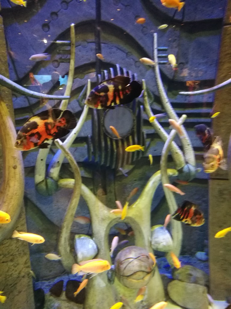 Имитация морского дна в океанариуме в Дубае, ОАЭ