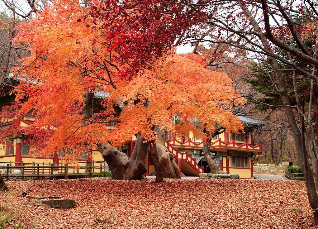 фото южной кореи