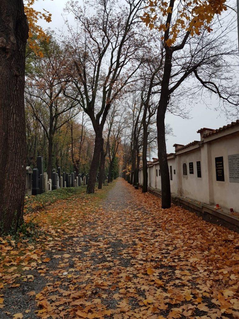 Осенняя аллея Ольшанского кладбища в Праге