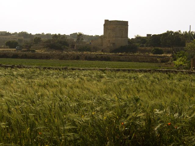 Природа Мальты располагает к агротуризму