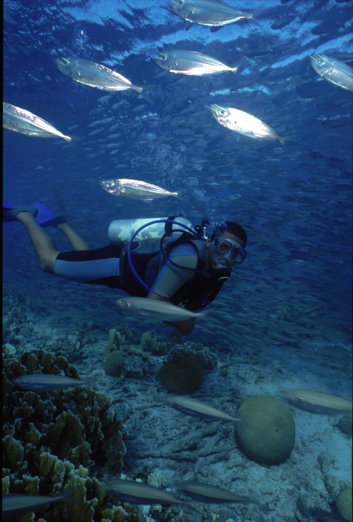 В водах близ Бонайре зарегистрировано более 450 видов рыб.jpg
