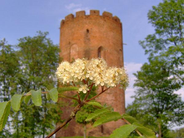 Белая Вежа, Брест