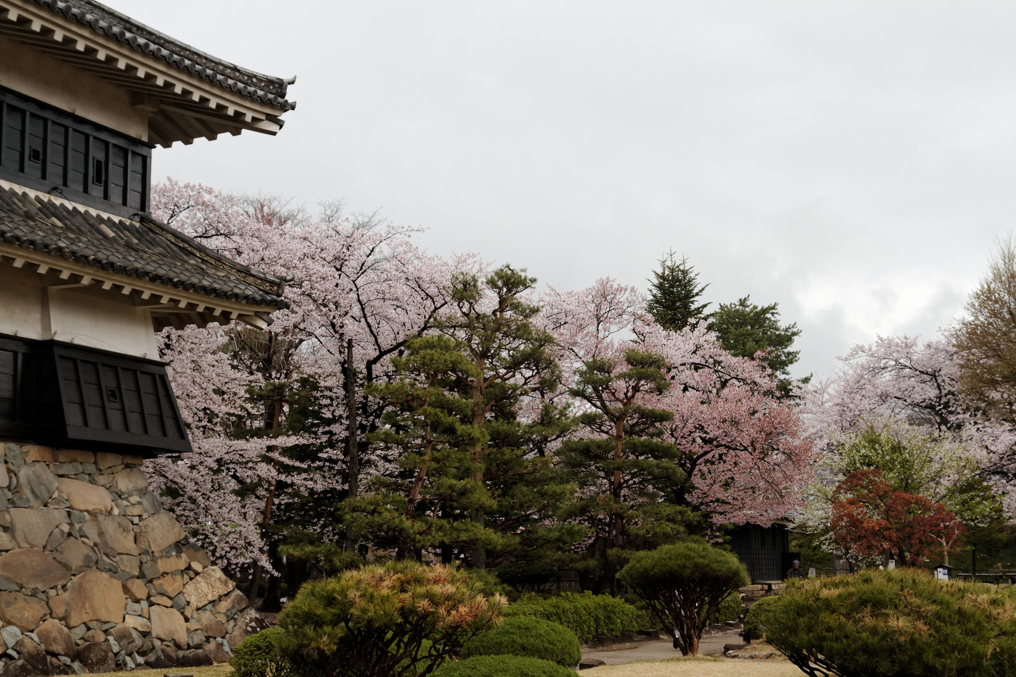 Цветение сакуры, Замок Мацумото
