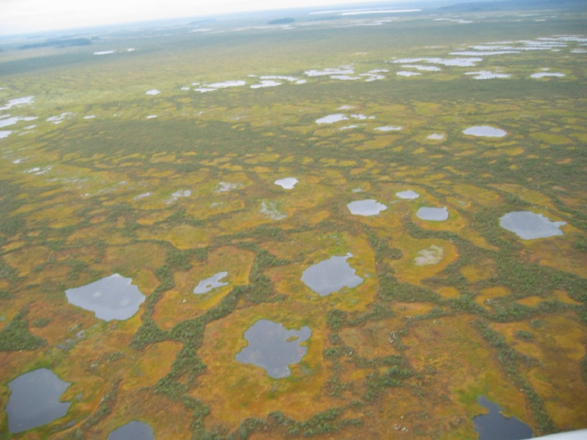 Васюганские болота, Томская область