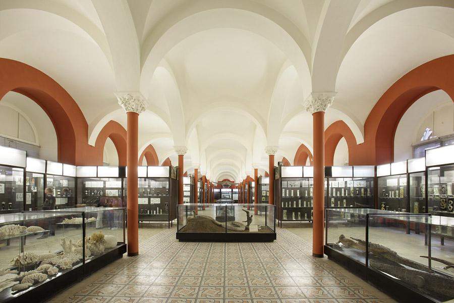 Нижний зал музея, Зоологический музей, Москва
