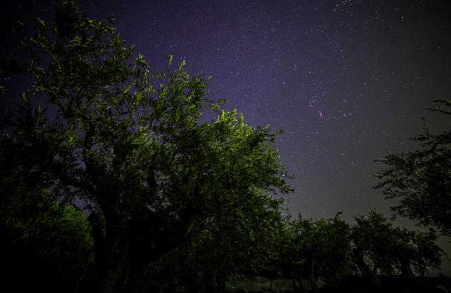 Гефсиманский сад ночью