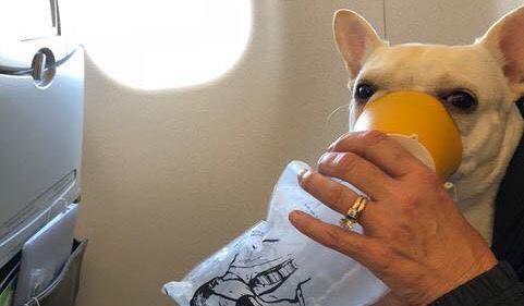 Экипаж самолета спас собаку, нарушив правила полета 3.jpg