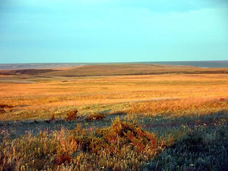 Таловская степь, Оренбургский заповедник