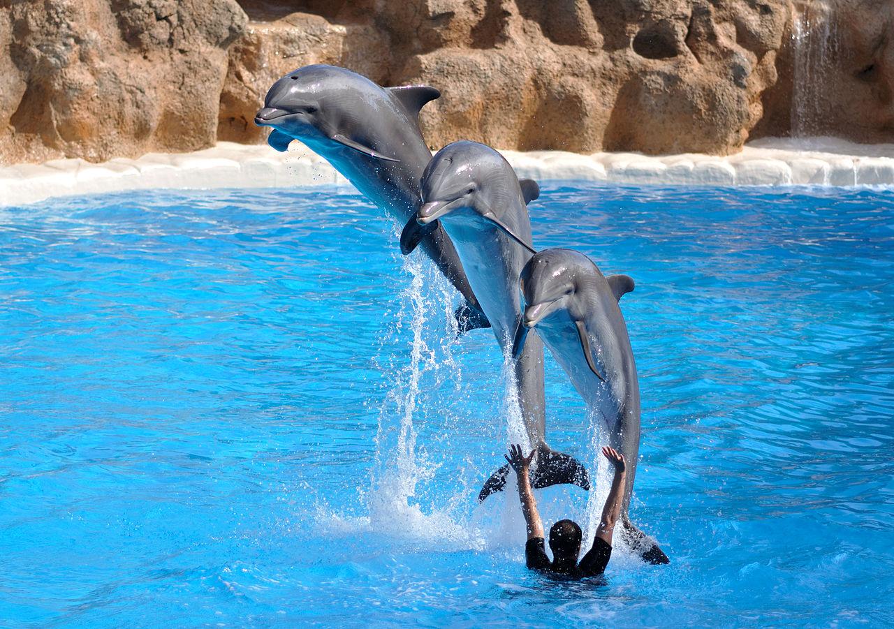 Лоро-парк на Тенерифе, шоу дельфинов