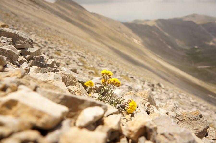 Цветы, Гора Олимп