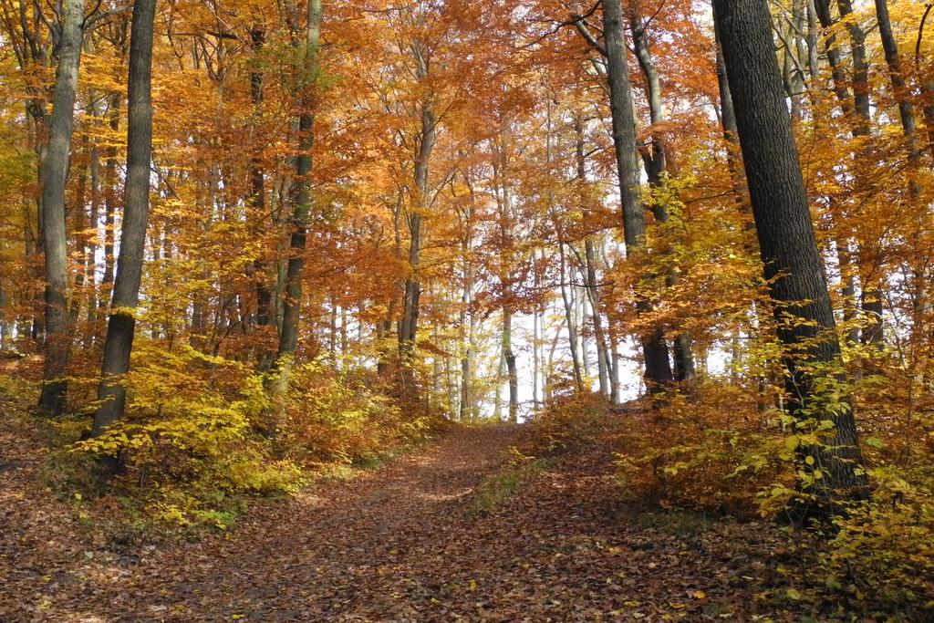 Осенний Венский лес, Австрия