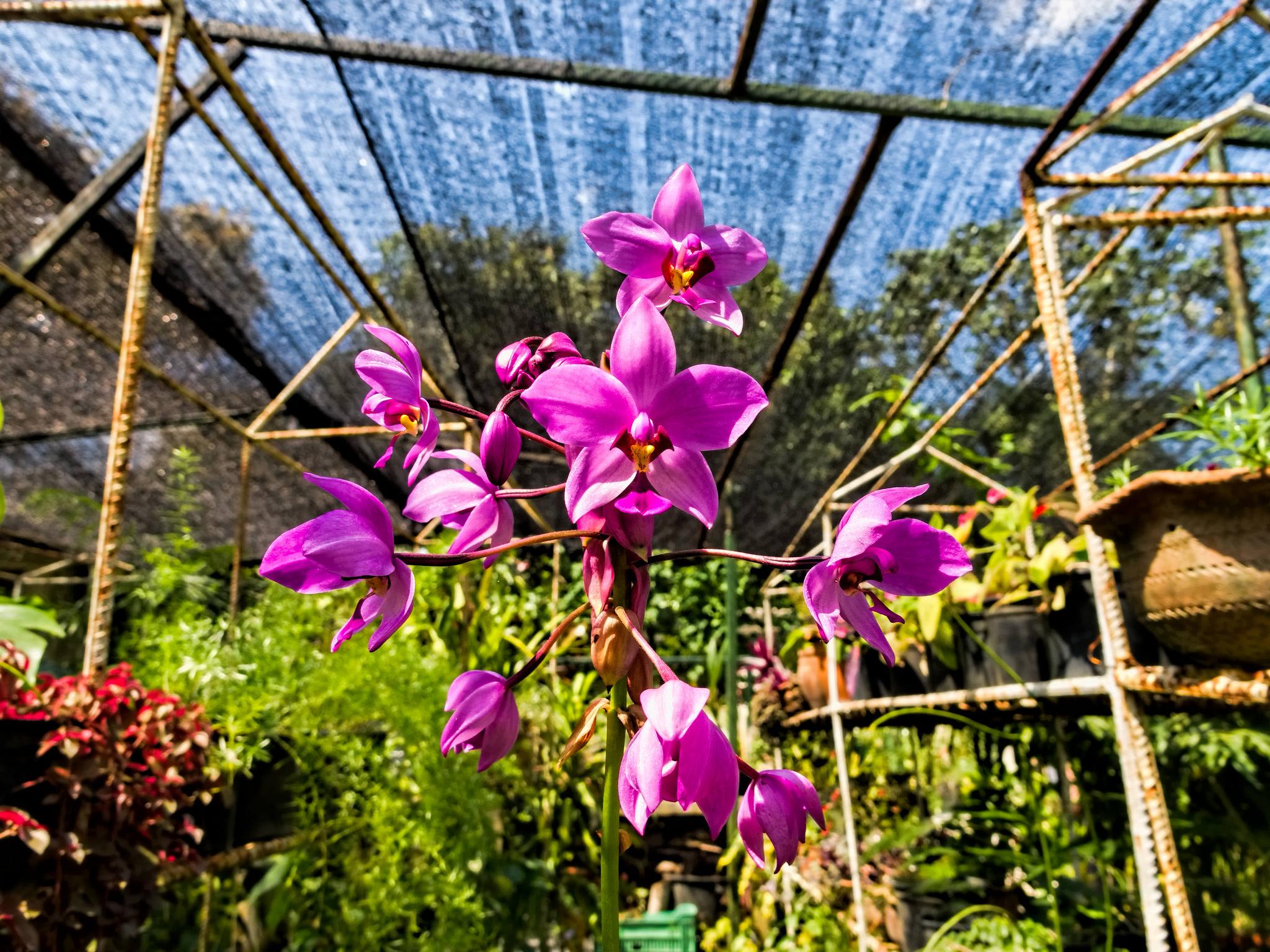 Национальный ботанический сад, оранжерея