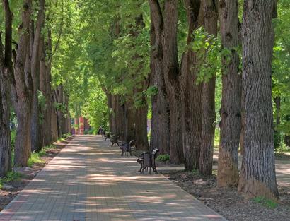 Парк Золотая аллея в Калуге