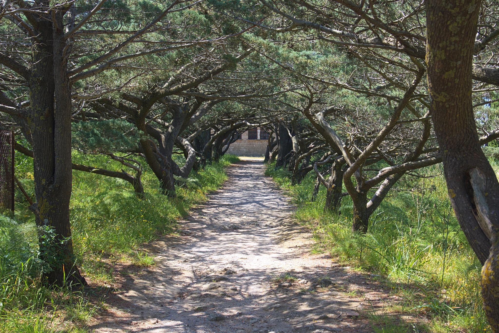 Гора Филеримос, Путь на Голгофу