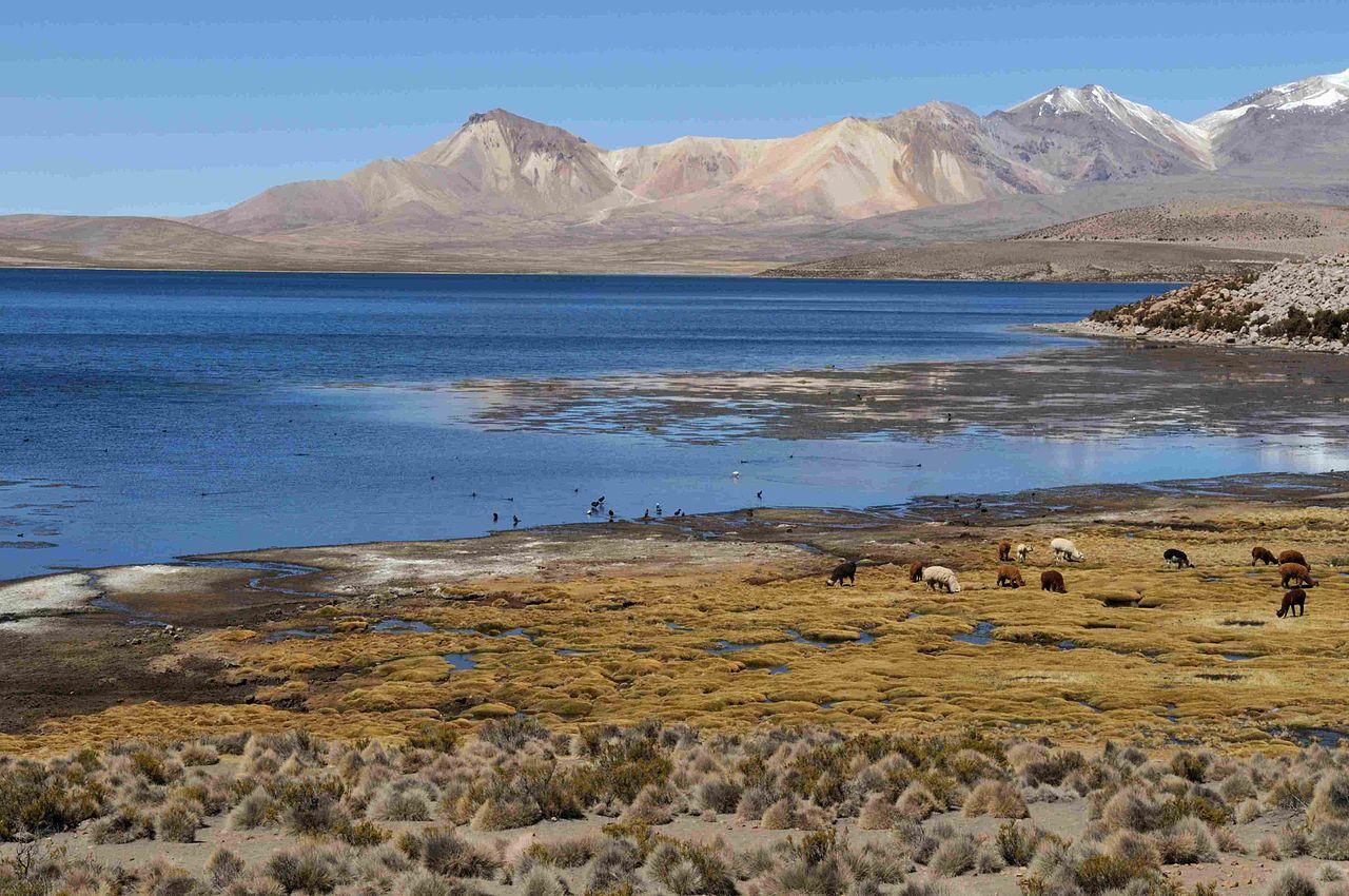 Высокогорное озеро Чунгара в провинции Паринакота, Чили