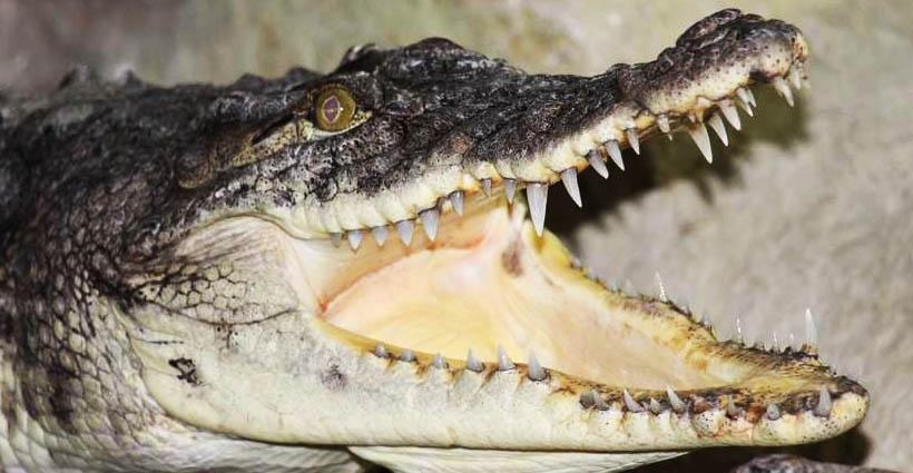 Питомцы крокодиловой фермы, Ялта