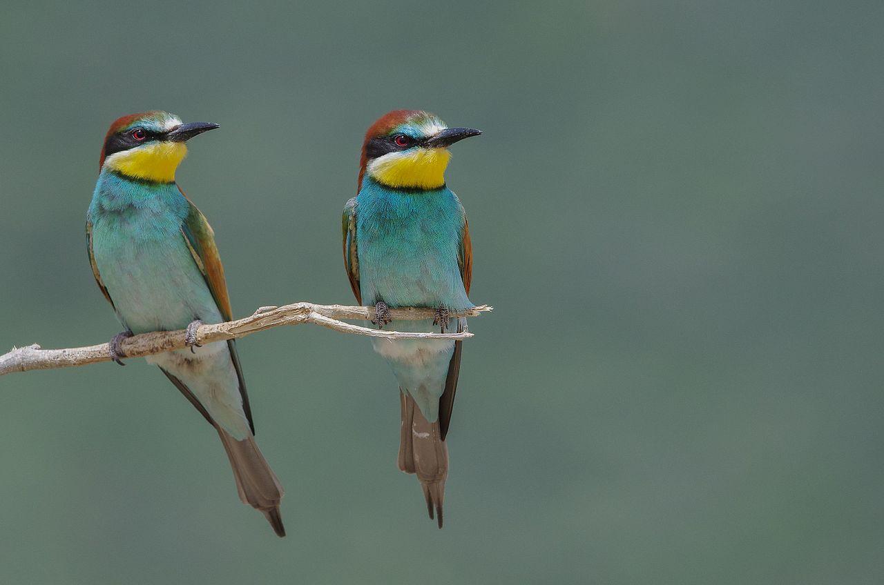 Птицы Национального парка Ишкель