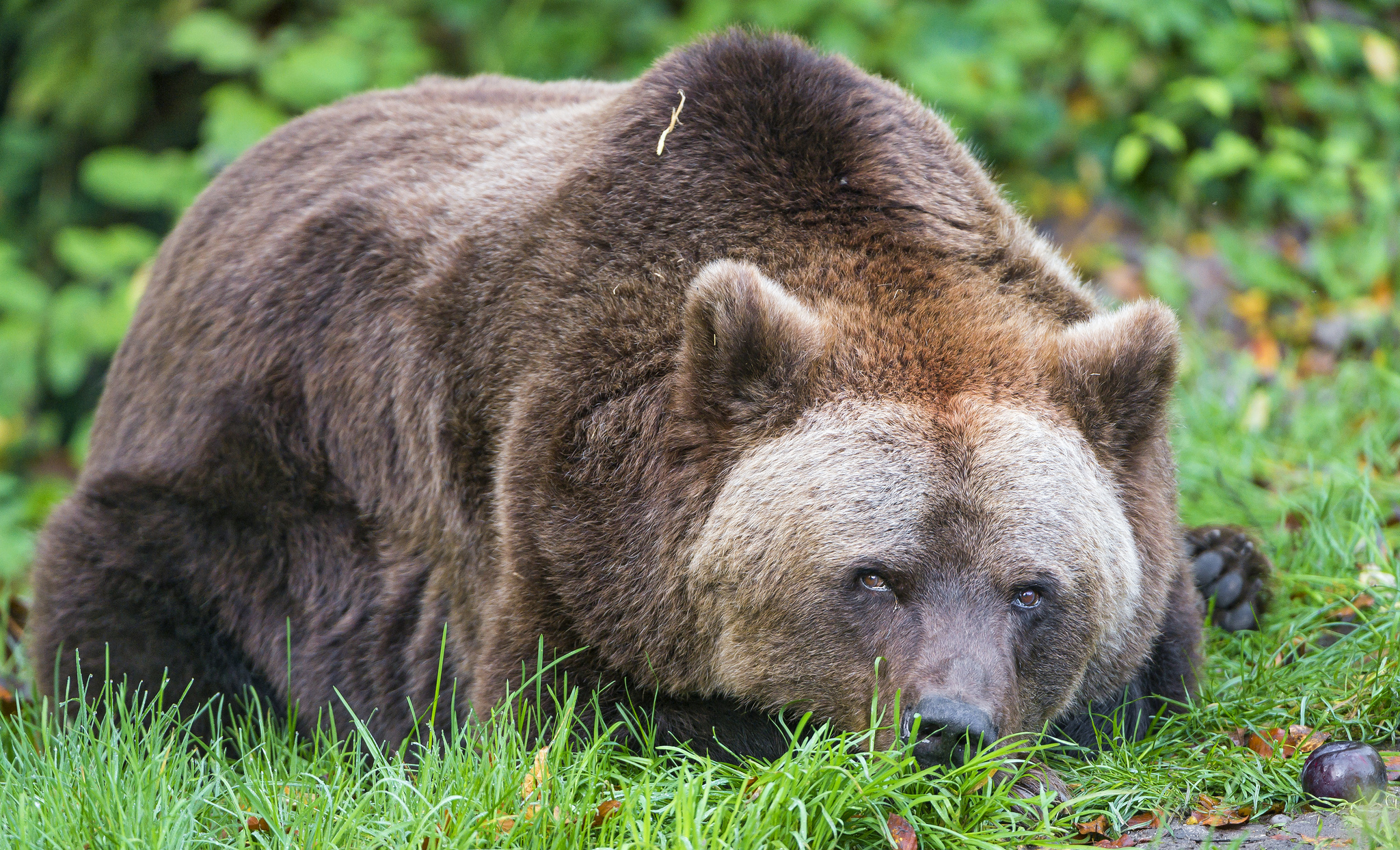 Зоопарк в Мюнхене, медведь