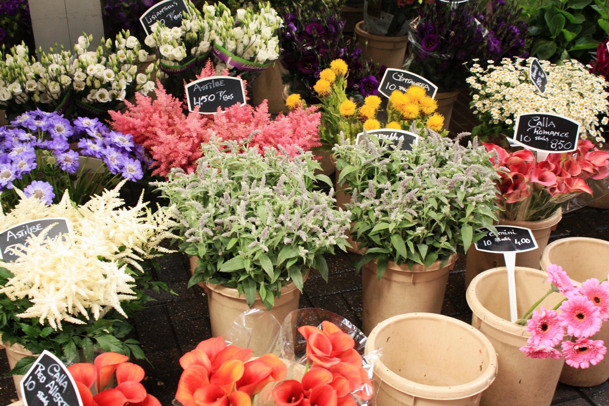 Цветы на рынке Блуменмаркт, Амстердам