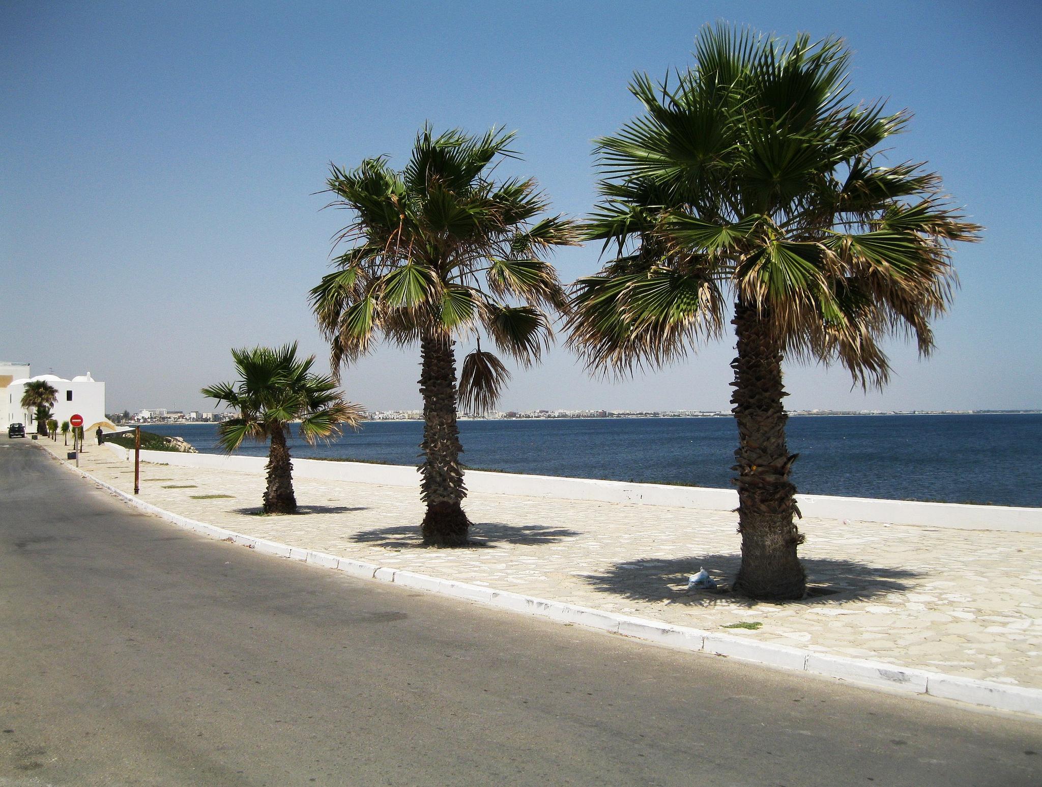 Пальмы на пляже Махдии