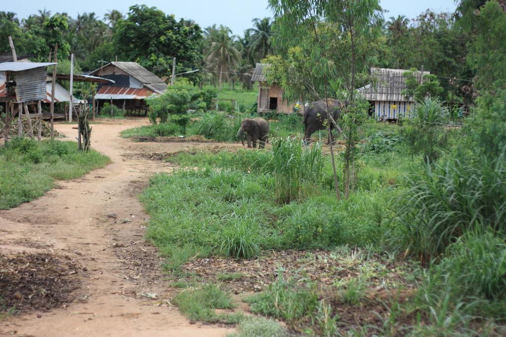 Деревня слонов в Паттайе, Таиланд