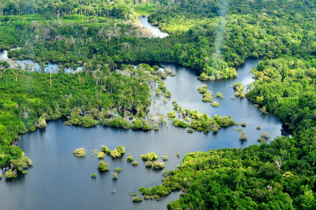 леса амазонки картинка это средство так