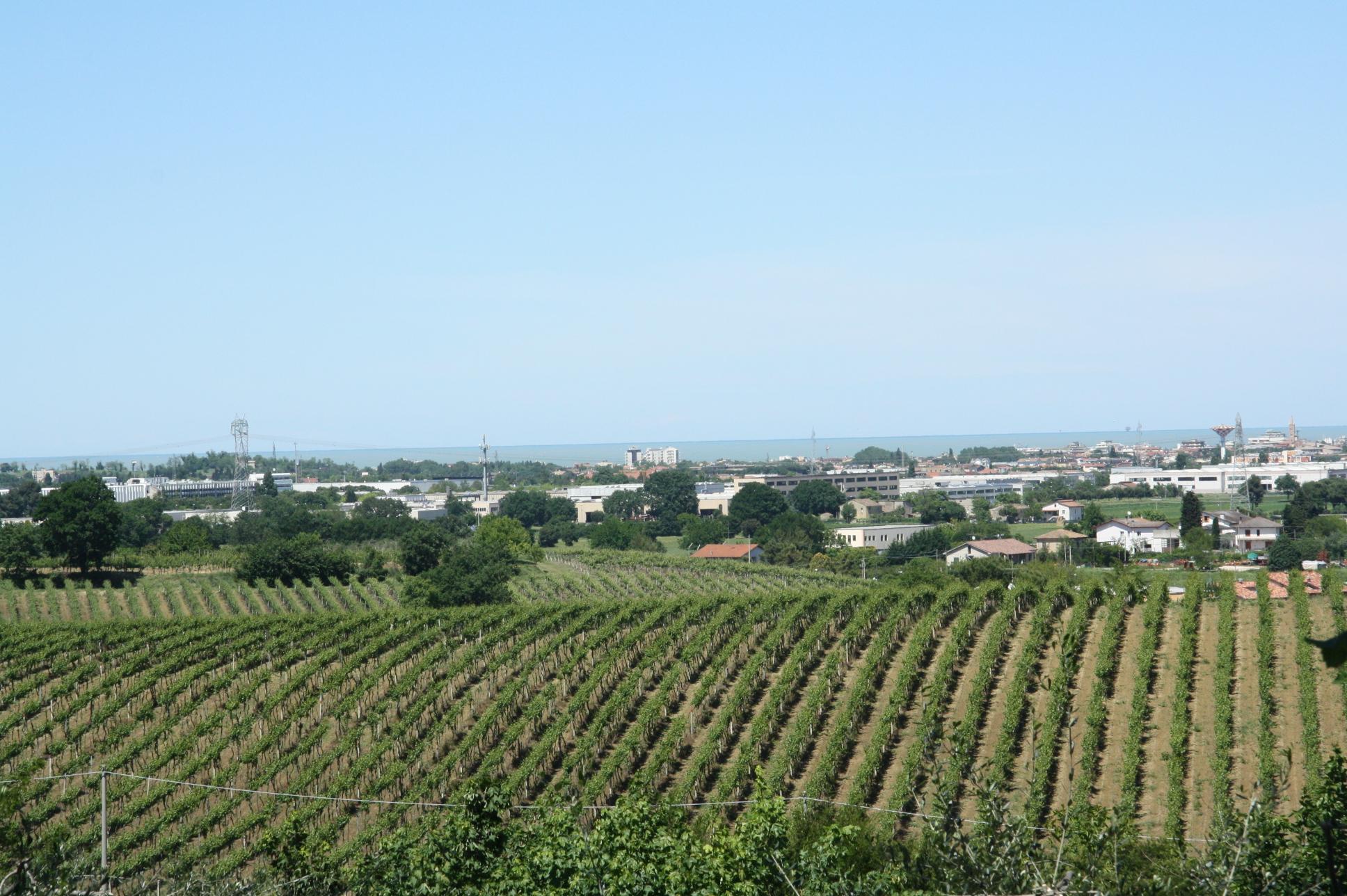 Поля винодельни Tenuta del Monsignore