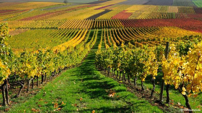 Тосканские виноградники.jpg