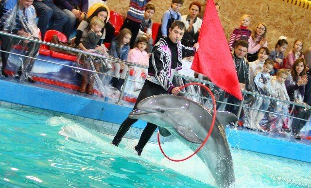 Шоу программа Созвездие дельфинов, Дельфинарий в Ярославле.jpg