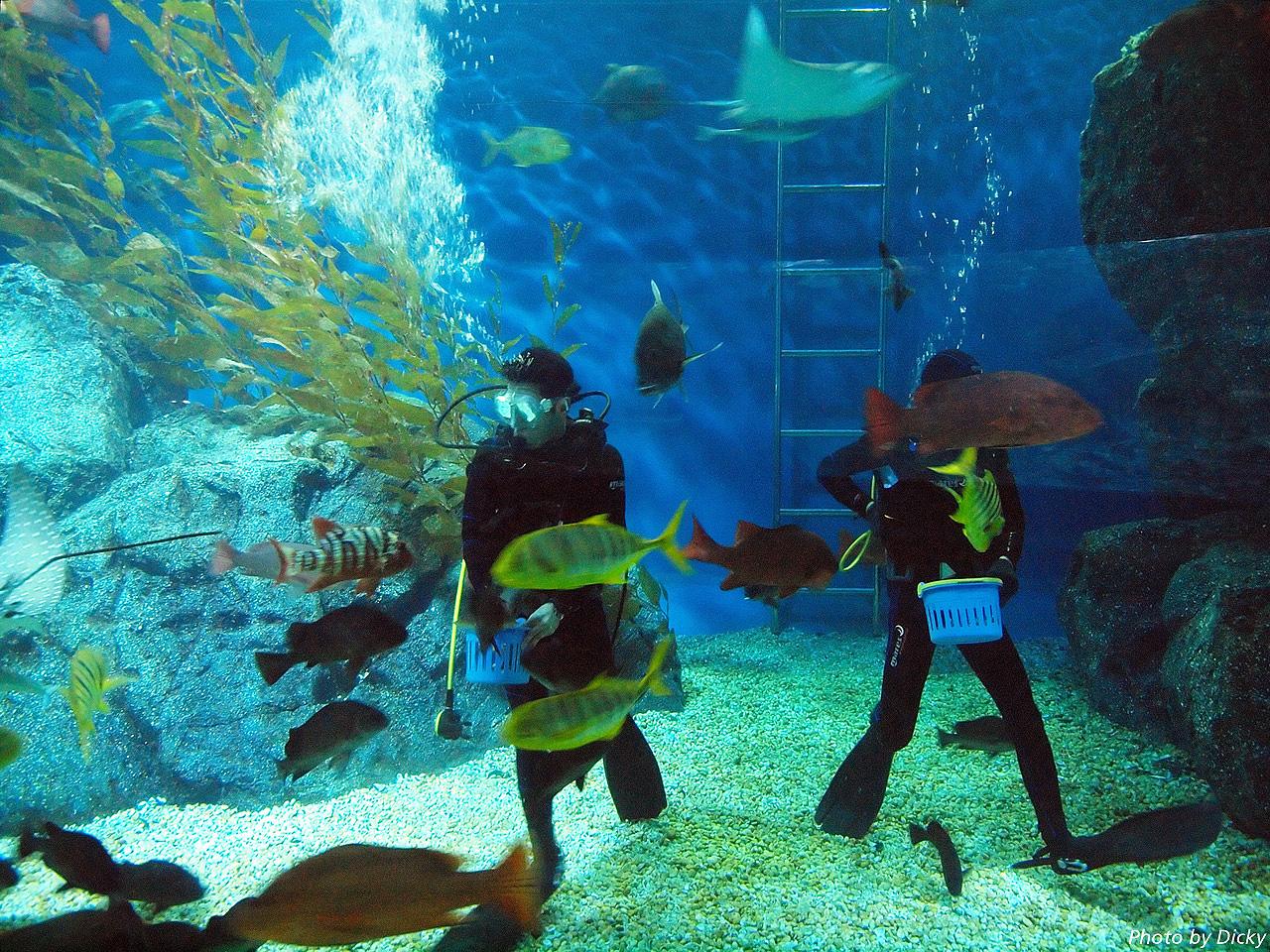 Аквариум Sea Life Bangkok Ocean World, кормление рыб