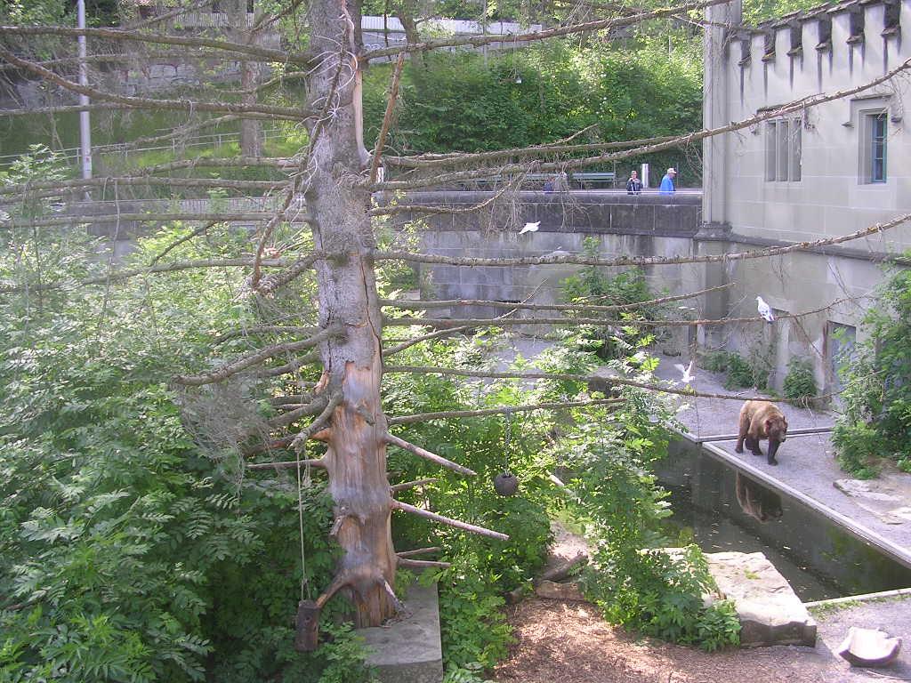 Медвежий парк, один из вольеров