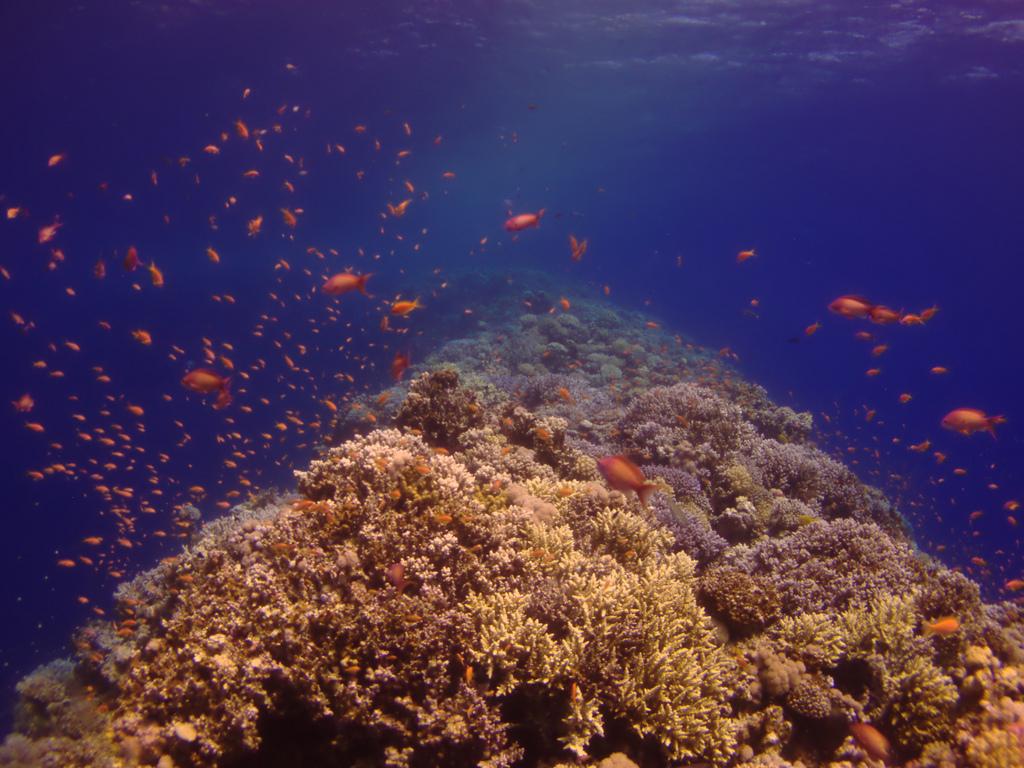 Подводный мир, Голубая дыра в Дахабе