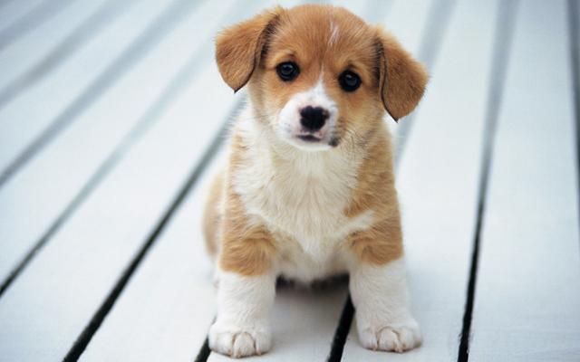 Стартовала продажа билетов на «Сапсан» для пассажиров с домашними животными