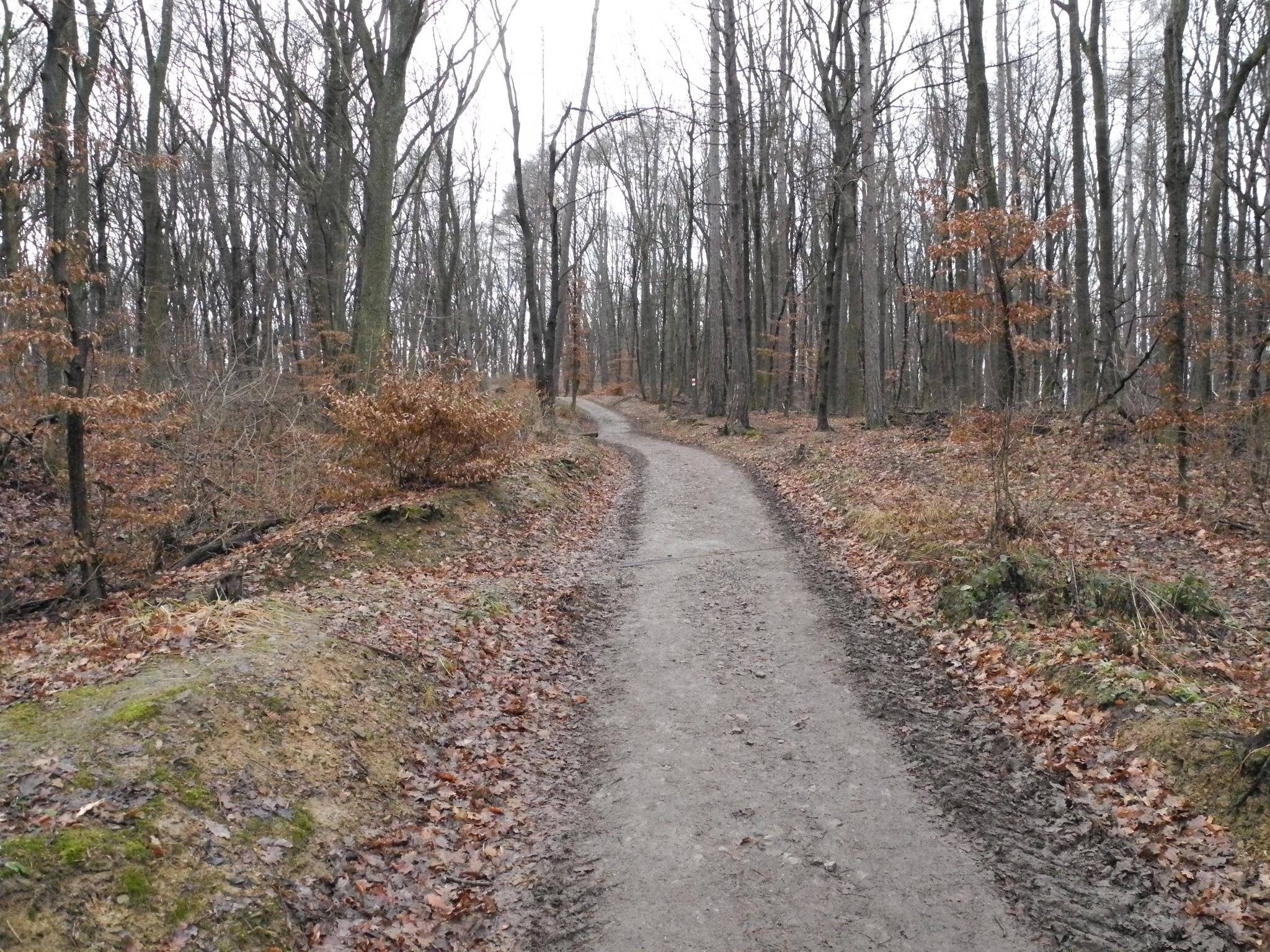 Венский лес осенью, Австрия