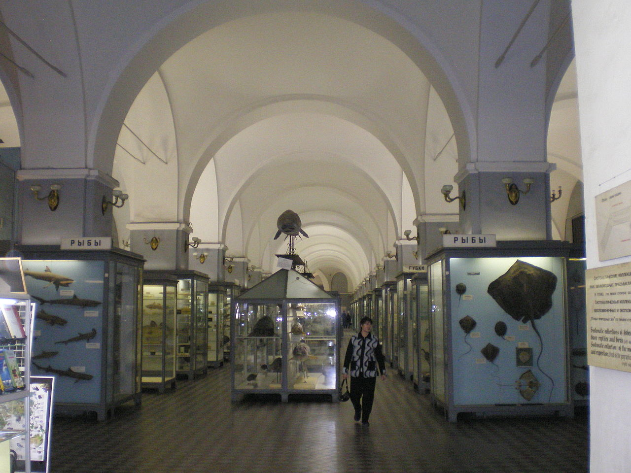 Зоологический музей РАН, один из залов