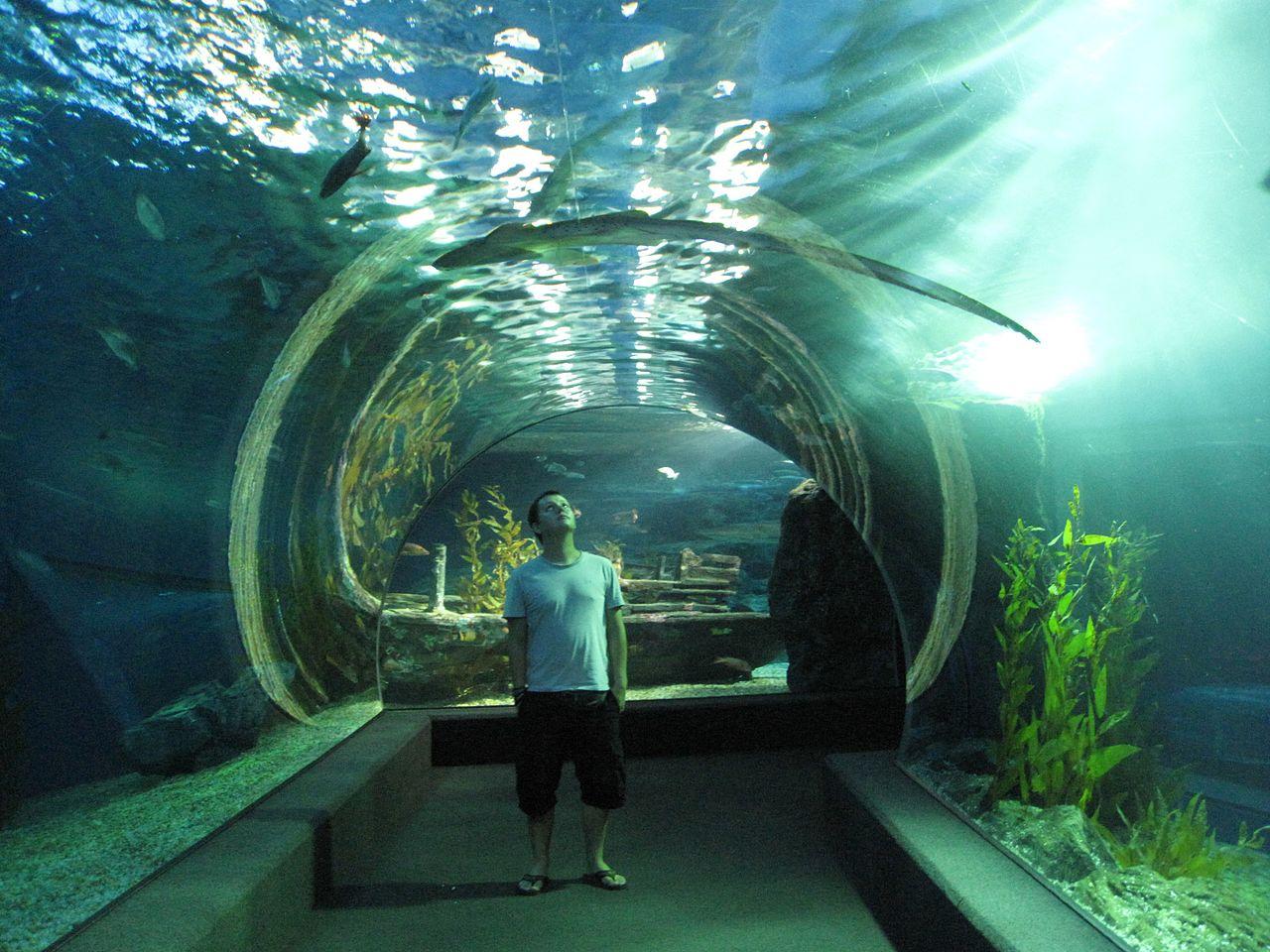 Аквариум Sea Life Bangkok Ocean World, подводная галерея