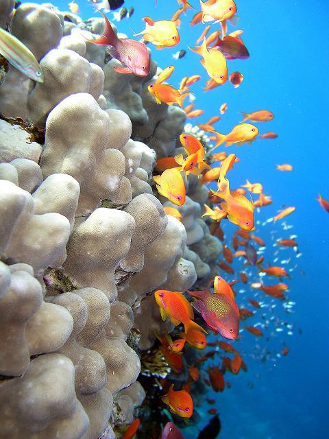 Подводные красоты у берегов Фиджи