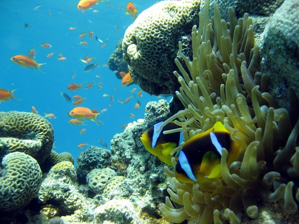 Красоты морских глубин в Таба Табе