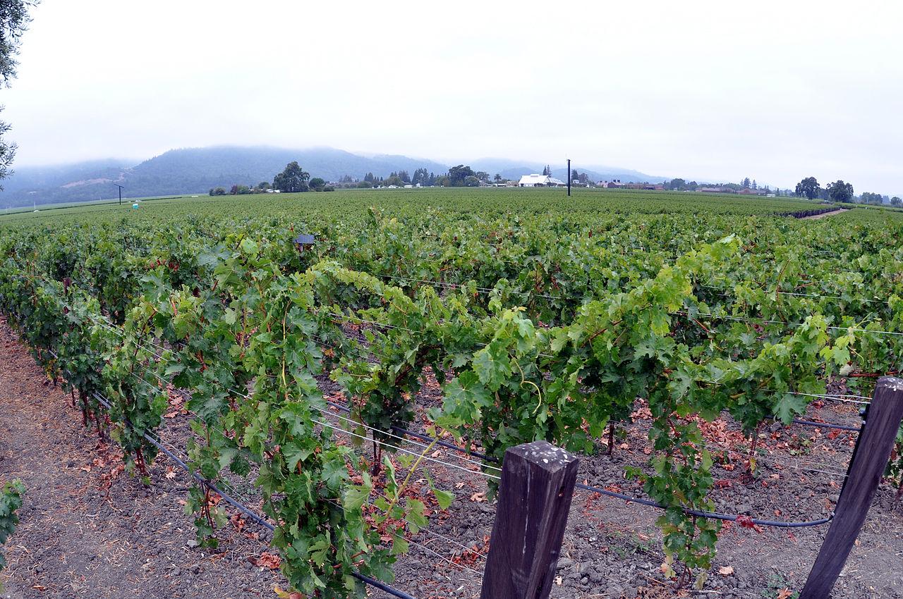 Виноградник в долине Напа