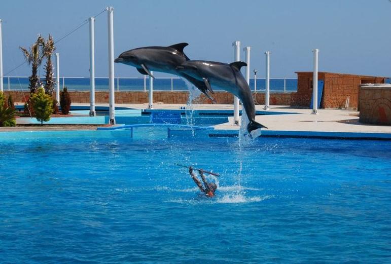 Шоу дельфинов, Парк «Сиаланья», Аланья