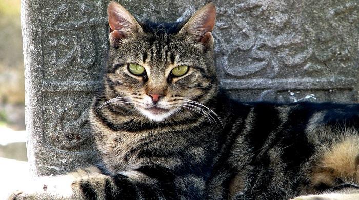 Cat-istanbul.jpg