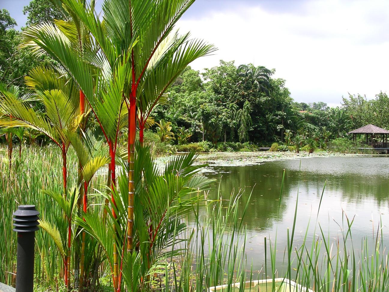 Озеро в ботаническом саду Сингапура