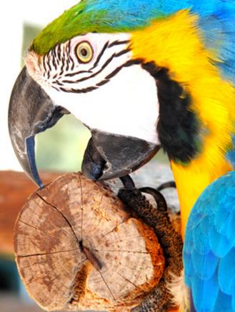 Парк птиц, Пафос