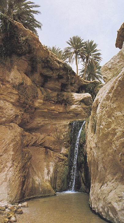 Оазис Тамерза, Тунис.jpg