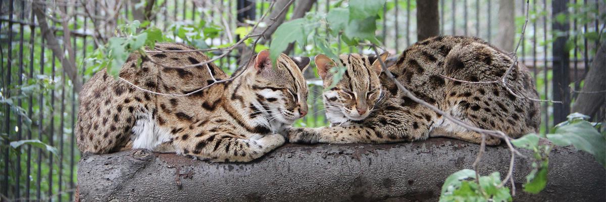 Новосибирский зоопарк, Новосибирск