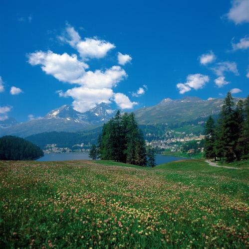 Вид на Санкт-Мориц и его озеро.jpeg